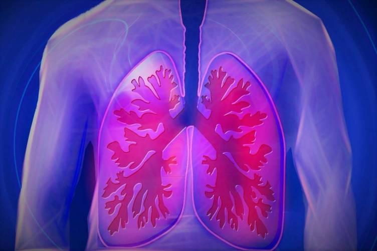 Tüdő, hörgők ágrendszere
